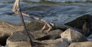 Fishing line on bird leg