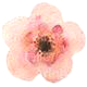 Flower_1.png
