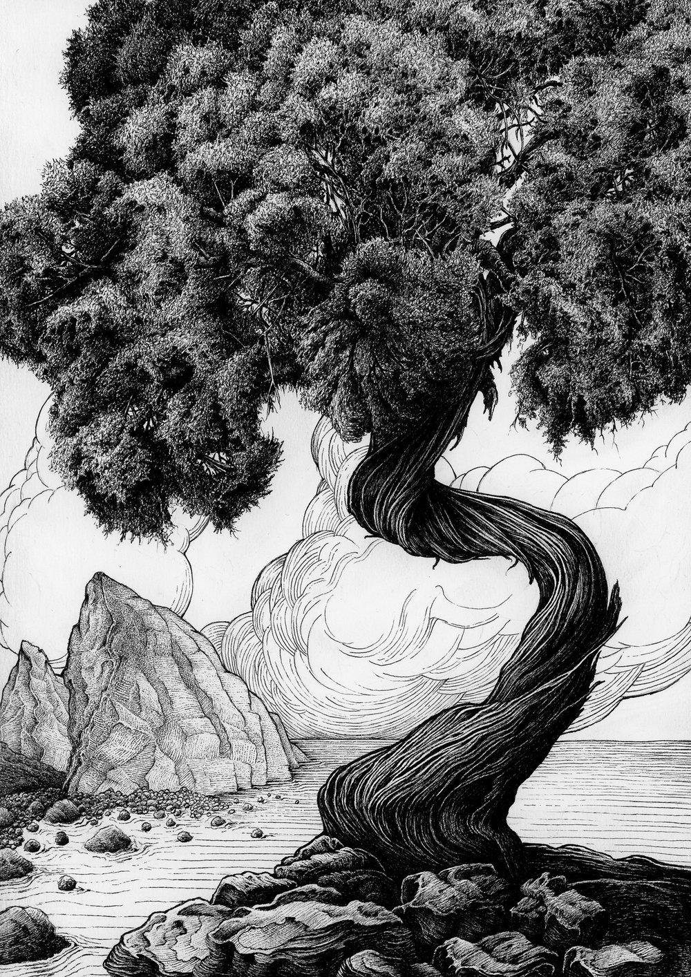 Juniper 2 - Tree 4 - 2018