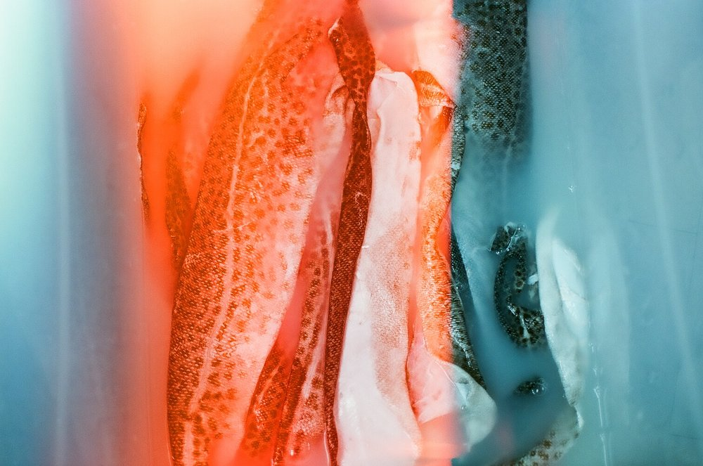 FISH SKIN WORKSHOP1, August 25 2017, 35mm film scan, Jane Walker.jpg