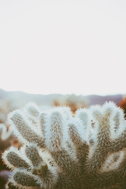 Joshua Tree | Forage & Wander