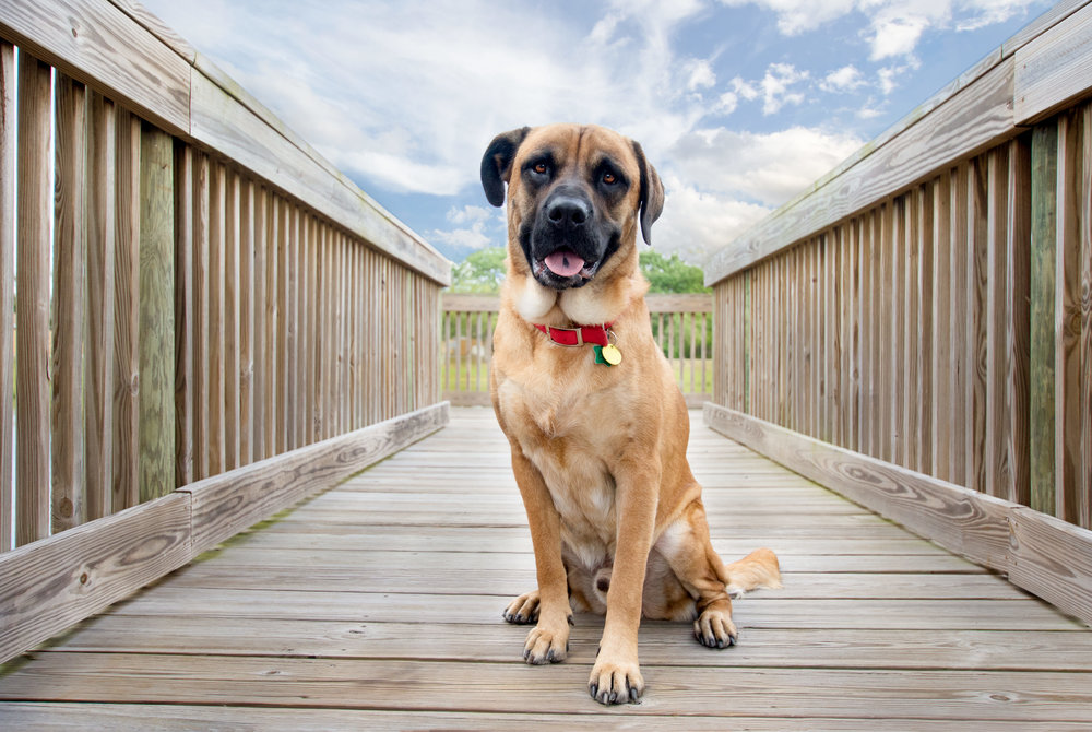I met up with Oscar and his human, Michaela, in Levitt Park in Rockledge. He is a 2-year-old Boxer mix who loves to chase cats and escape whenever a door is left open!