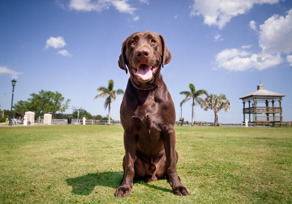 """Cocoa Village Riverfront - This historic location is an excellent choice, it provides a fantastic variety of backdrops, and the whole village is very dog-friendly! Be sure to check out a specialty dog shop called """"Tails at the Barkery"""" while you are here!"""