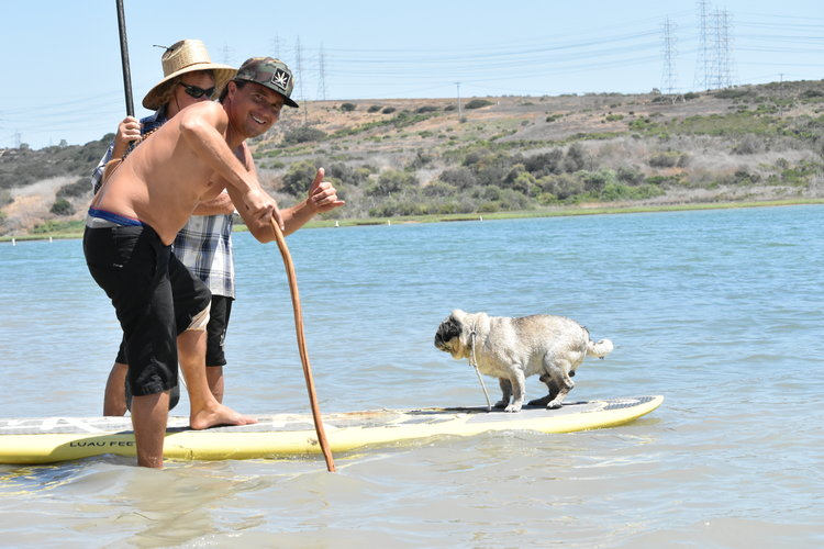 The pup preparing for downward dog on his stand up paddle board. And Adam is super stoked by this. Carlsbad, CA.