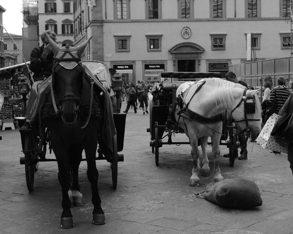 Horse & buggy in Piazza del Duomo in Florence
