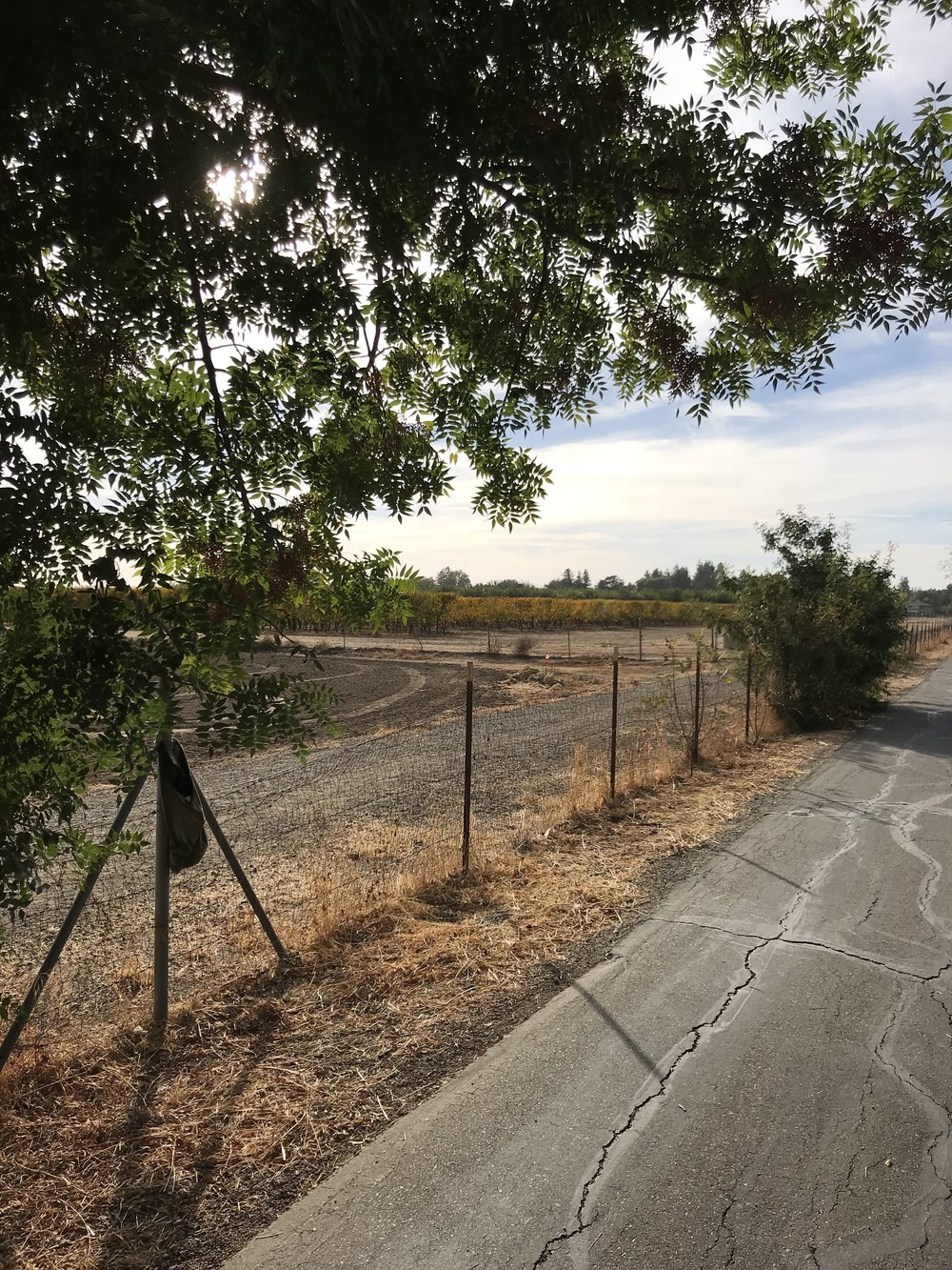 UC Davis Ag land and Bike path parallel to Russell Blvd. The border between the City of Davis and the Regents of California.