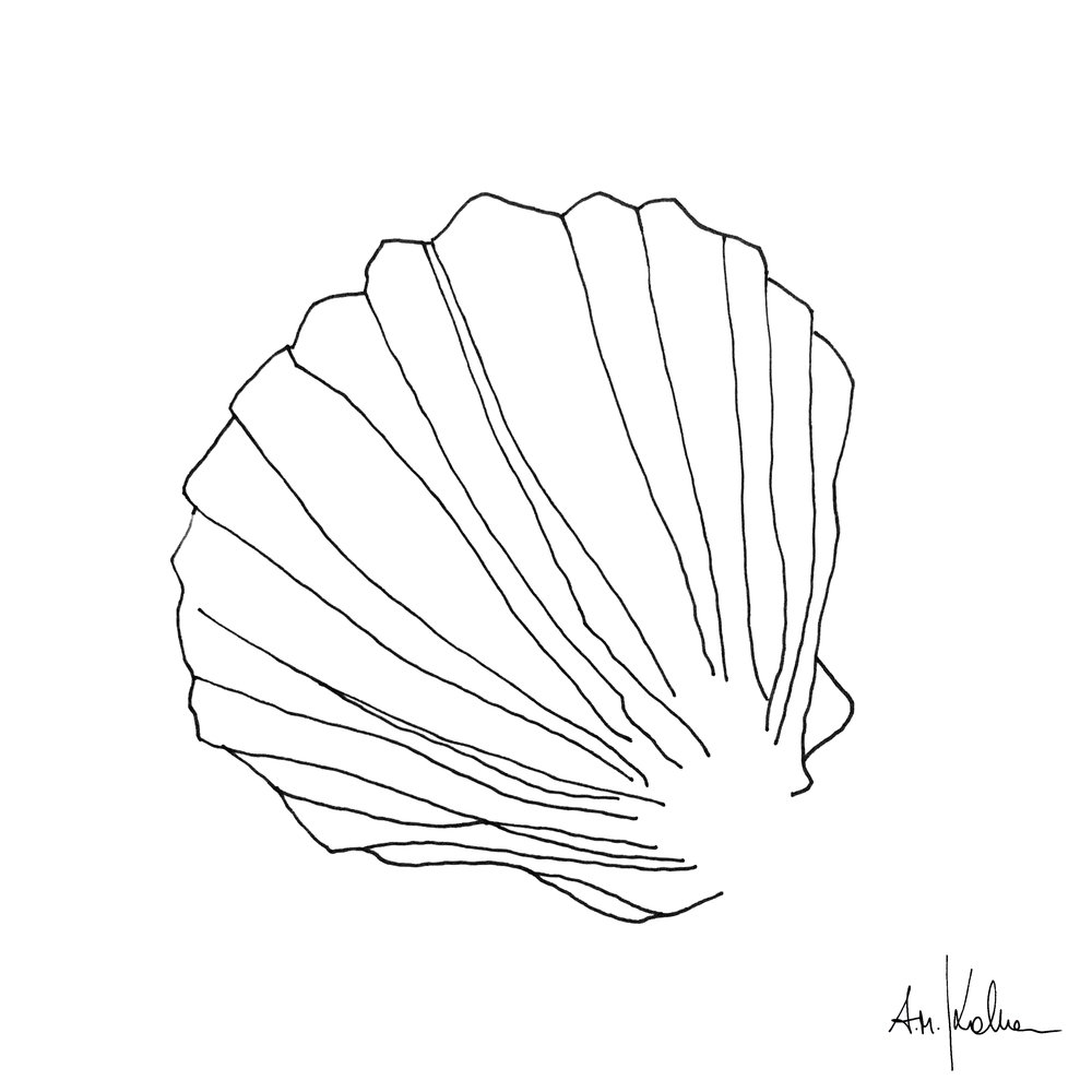 SHELL II   Ink on Hahnemühle paper - 190gr I A4 format. Write a request by just clicking on this image.