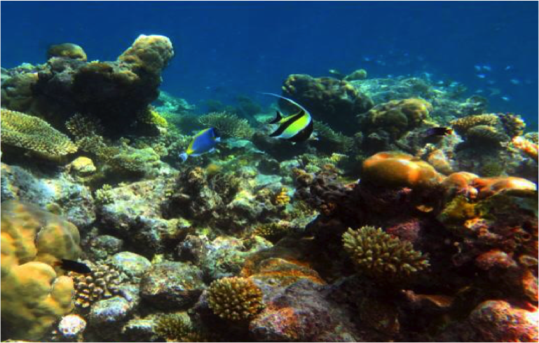 A healthy, controlled coral reef. Photo: Caitlin Gilmour @_caitlingilmour