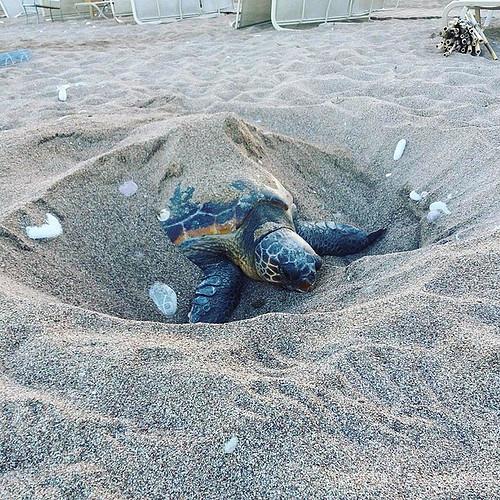 Sea Turtle. Photo: Harriet Tyley @harrietyley