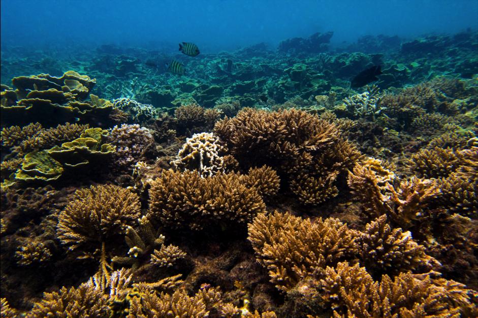 Perhentian's coral reefs. Photo: Matt Bassett