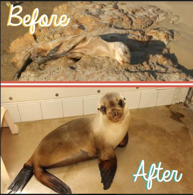Harrington before and after rehabilitation at the centre. Photo: PMMC