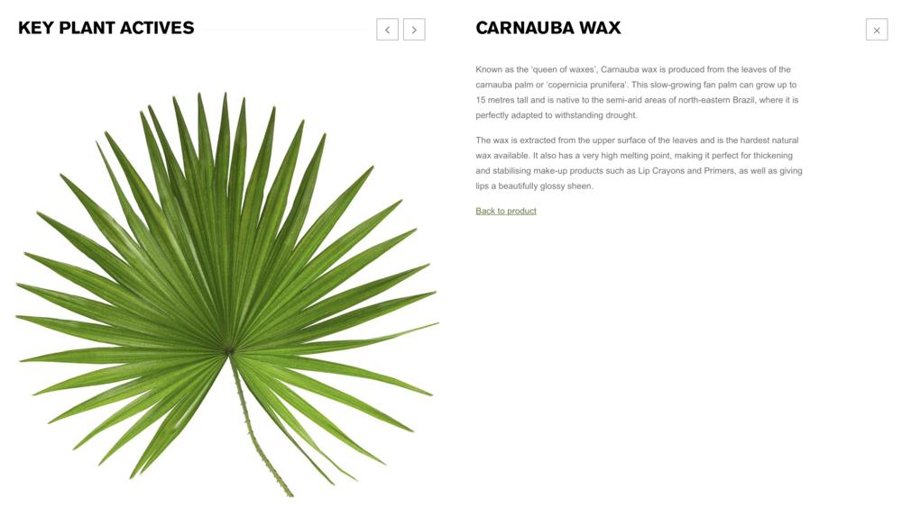 Green People: Carnuba Wax Description