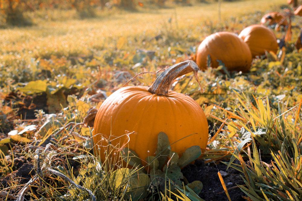 pumpkin-patch-yorkshire-autumn-bucket-list.jpg