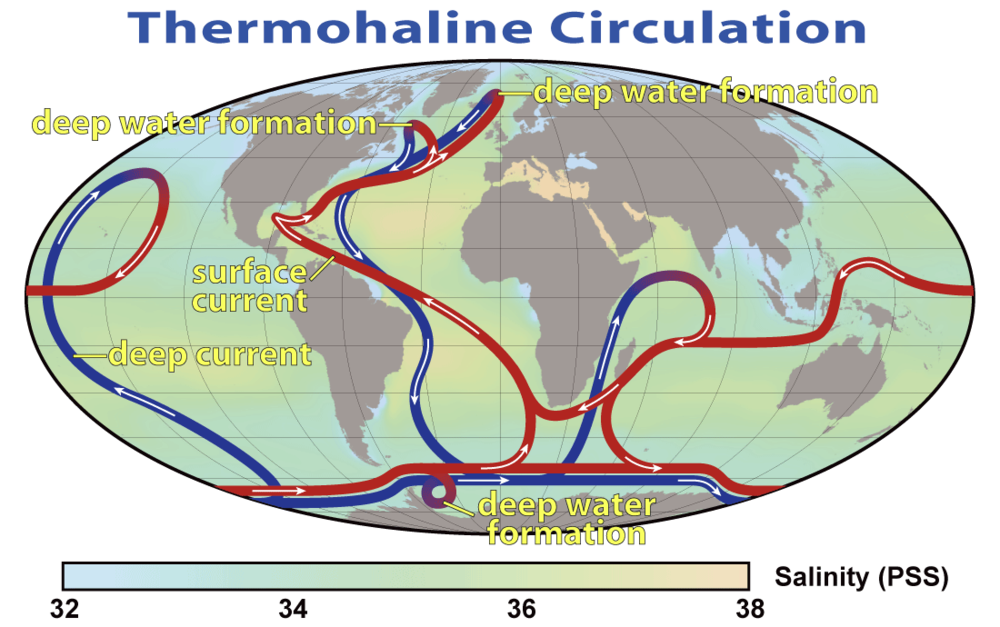 Thermohaline circulation (THC) with blue paths representing cold, dense deep water currents and red paths representing warmer, less dense surface currents. Credit: NOAA