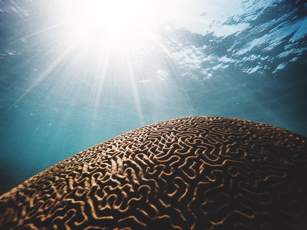 """Coral reefs, as """"living rocks,"""" provide the foundation for the ecosystem that supports much of life on earth. Photo credit: Daniel Hjalmarsson"""