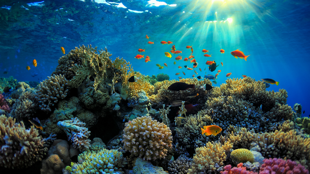 The Great Barrier Reef supports an astounding amount of life. Photo credit: Science Magazine