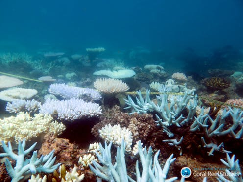 Bleaching on a reef is a spectrum: some are more resistant than others. Photo credit: Mia Hoogenboom