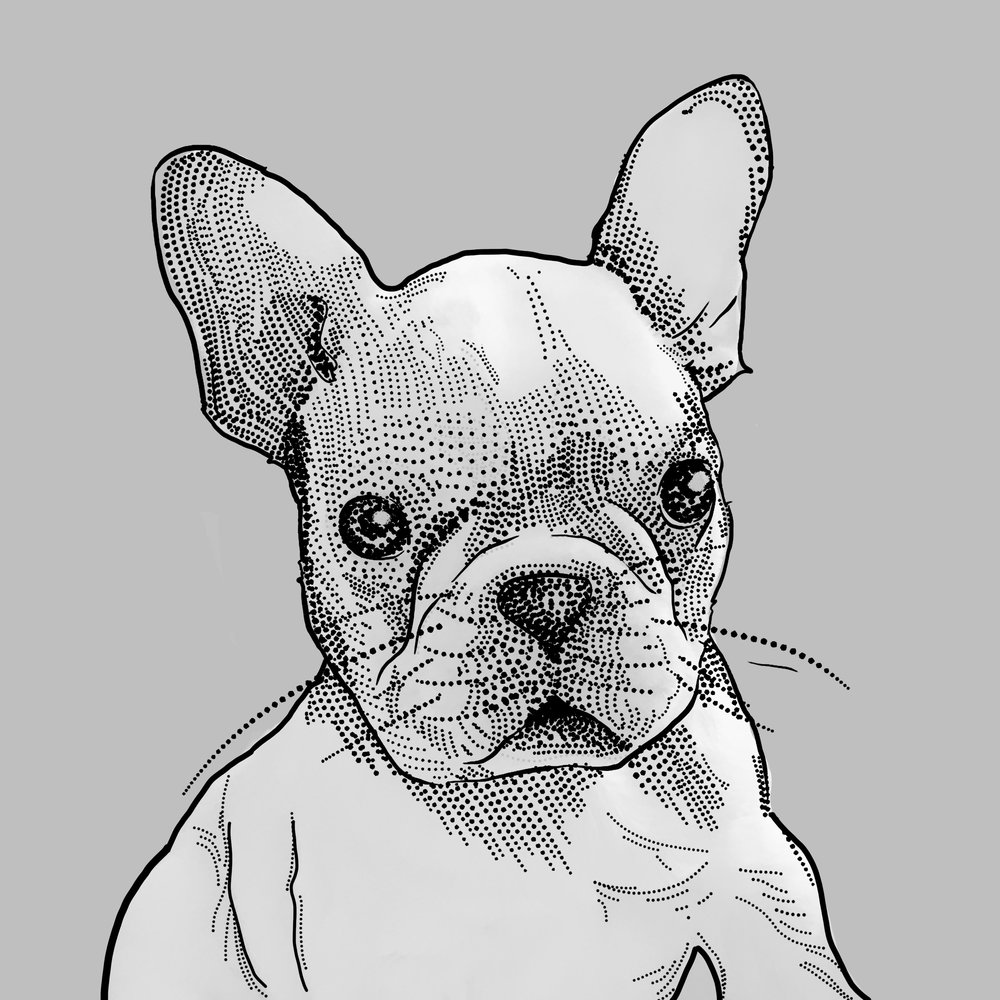 Milton - Milton is a French bull dog puppy that provides much joy around the Subversive office.
