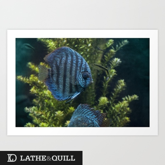 Print of two blue fish