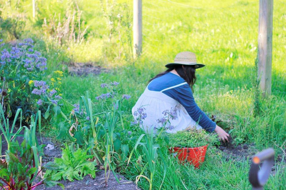 vegetable gardens -