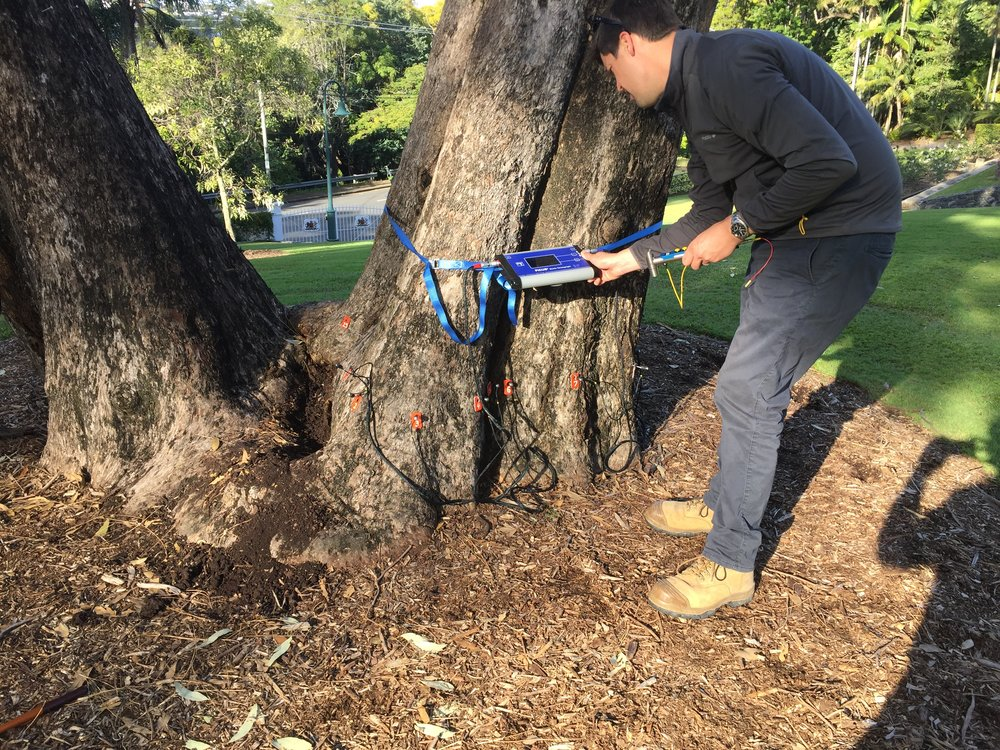 Roger Rankine using a Sonic Tomograph to identify trunk density and decay in a tree at Queensland Government House.