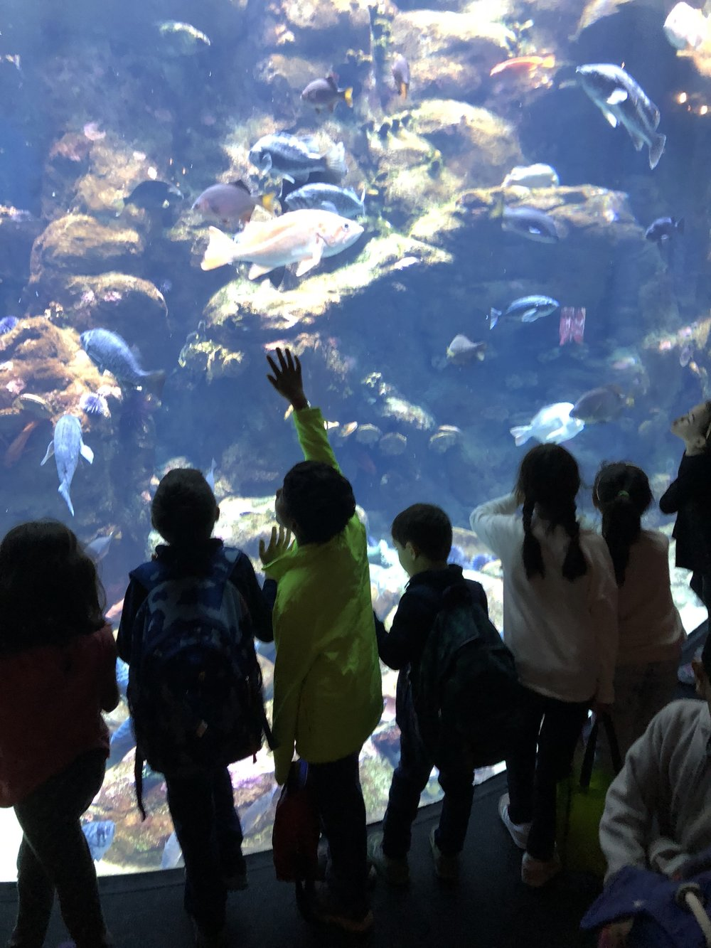 We believe in learning outside the classroom - Co-op field trip to the California Academy of Sciences