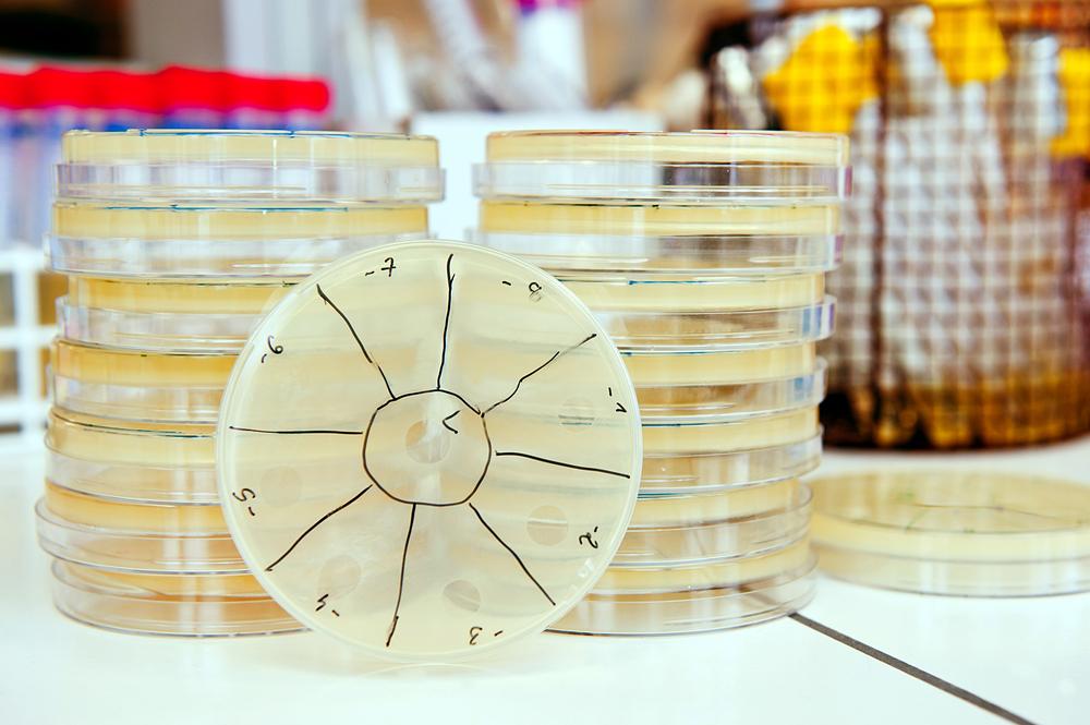 Bacteriophage isolation