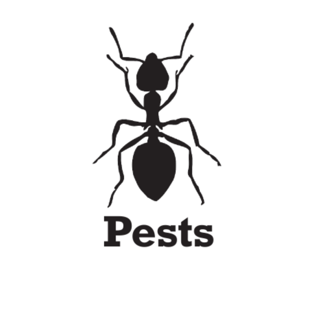 Scaled Up Pests No Backround.png