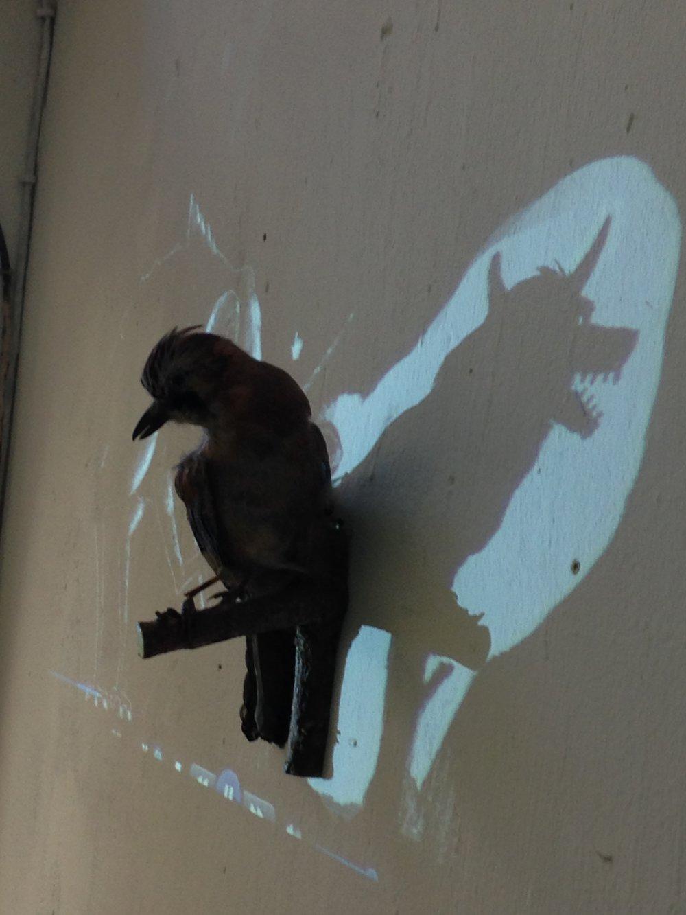 Schattenvogel.JPG
