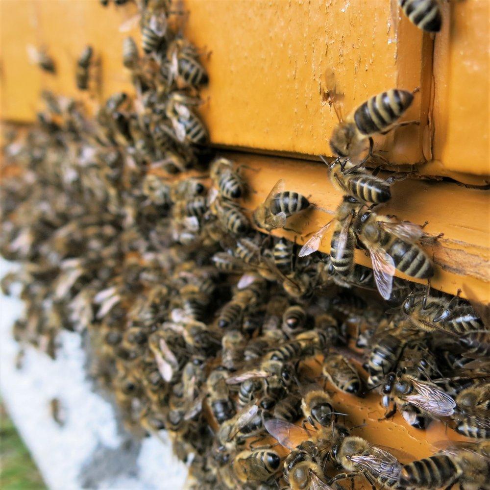 Kube med bier kvadrqt.jpg