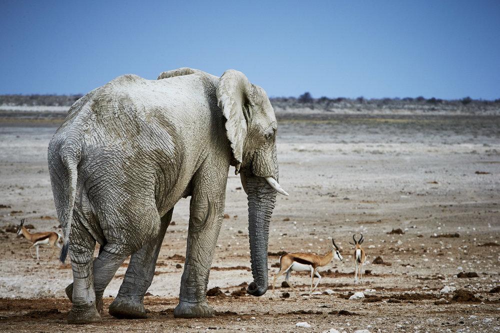 PN-C Namibia_Wild 13.jpg