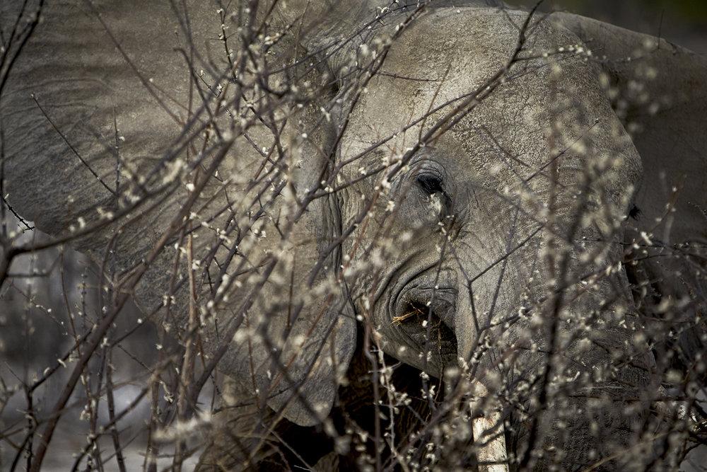 Namib PN-C 21.jpg