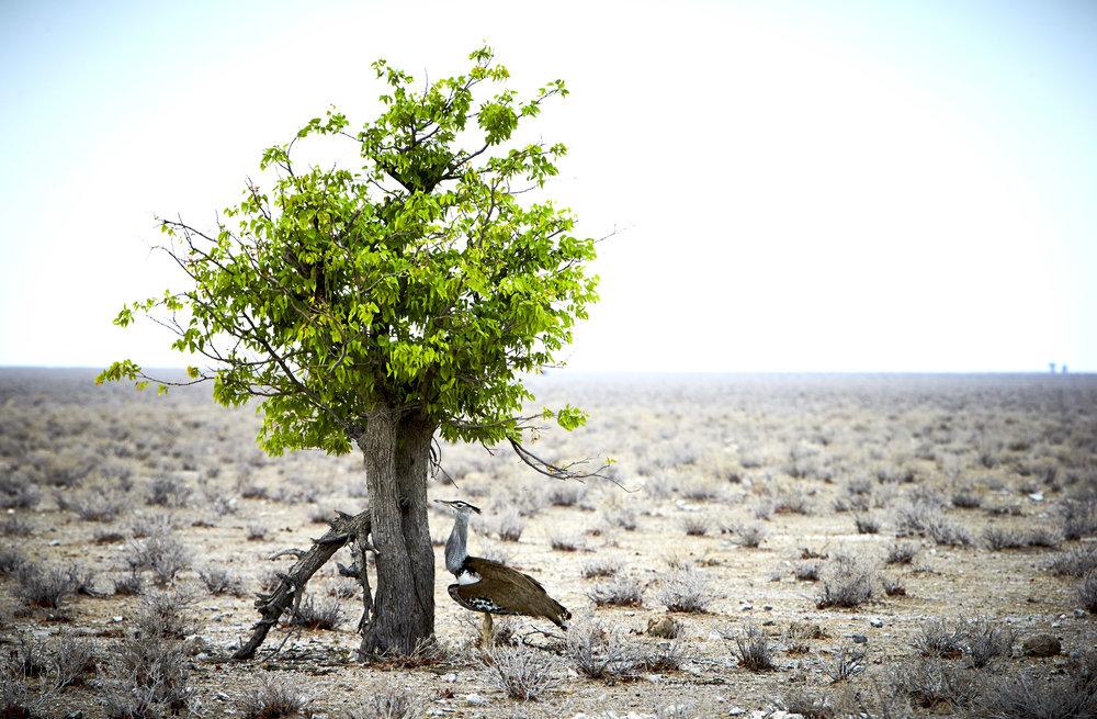 PN-C Namibia_Wild 23.jpg
