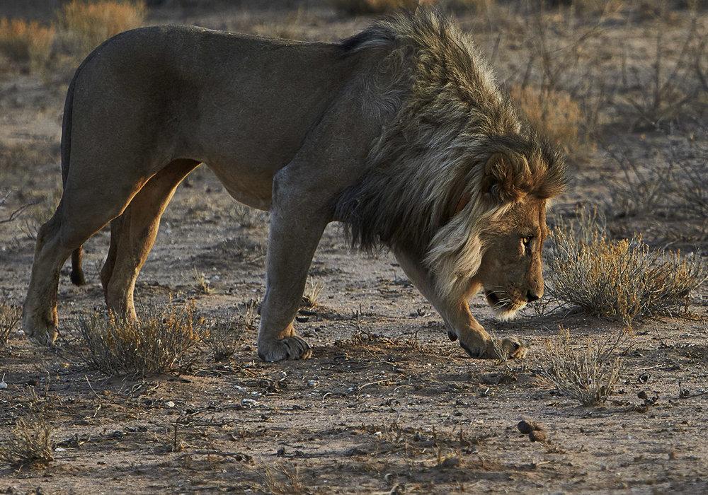 Namibia_Wild 7.jpg