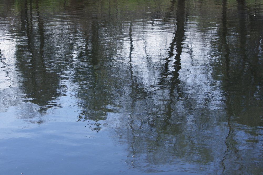 water-reflecting-spring-trees copy.jpg
