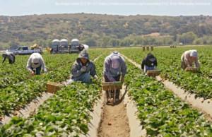 field-workers-300x194.jpg