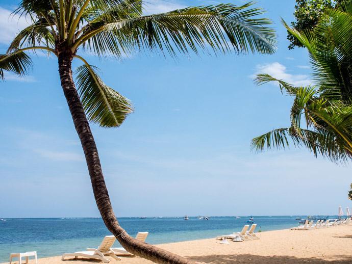 Palm Tree Beach.jpg