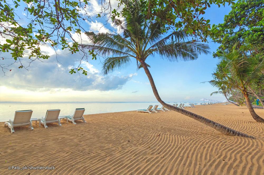 Palm Tree Beach 2.jpg