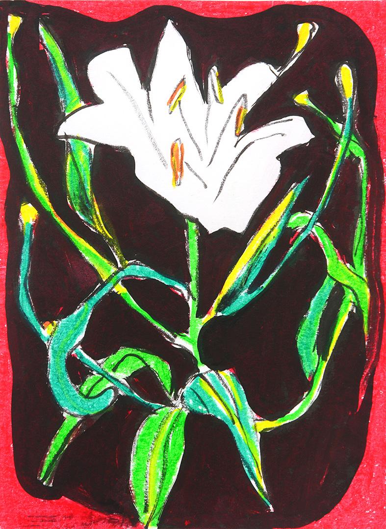 Small White Lily sm.jpg