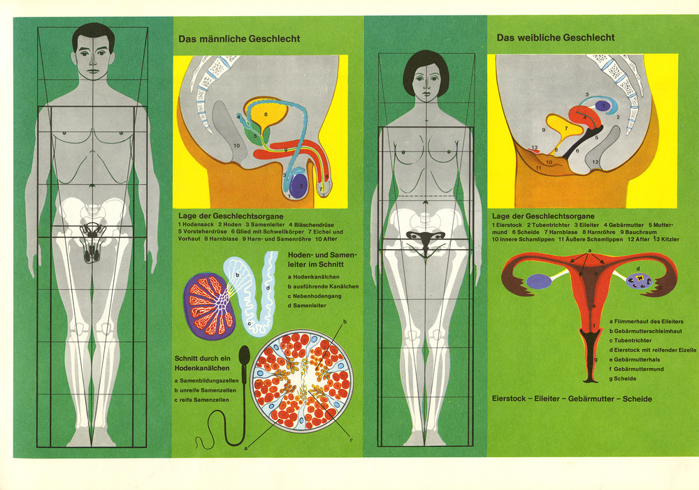 sexualkunde-atlas-1.png