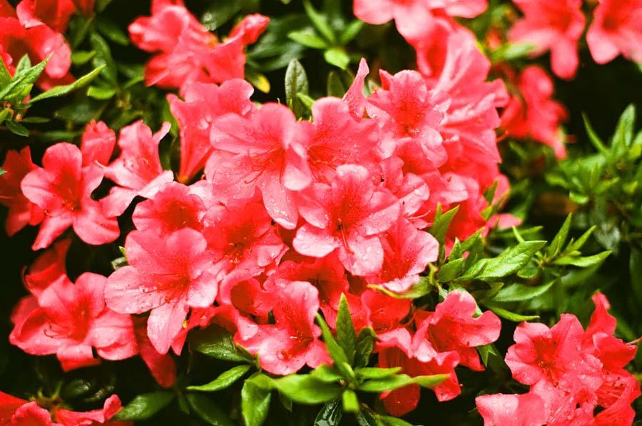 flower_000195030003.jpg