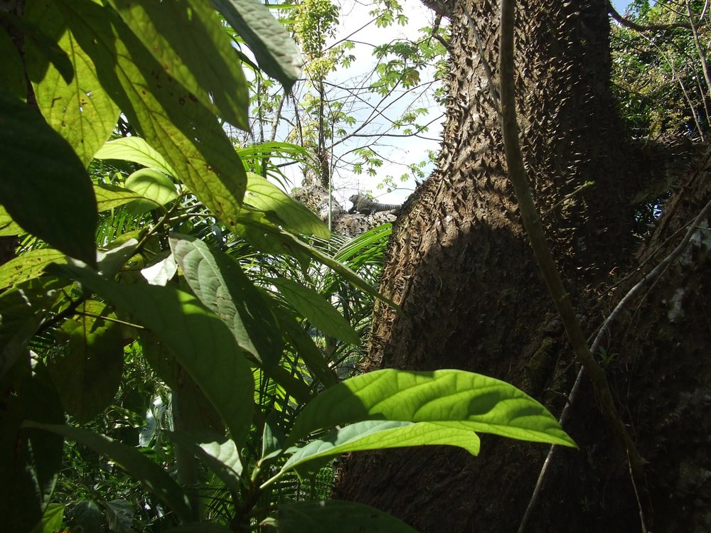 banner iguana 3534.jpeg
