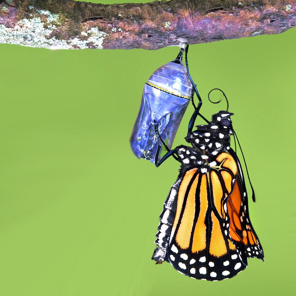 butterflyemerging.jpg
