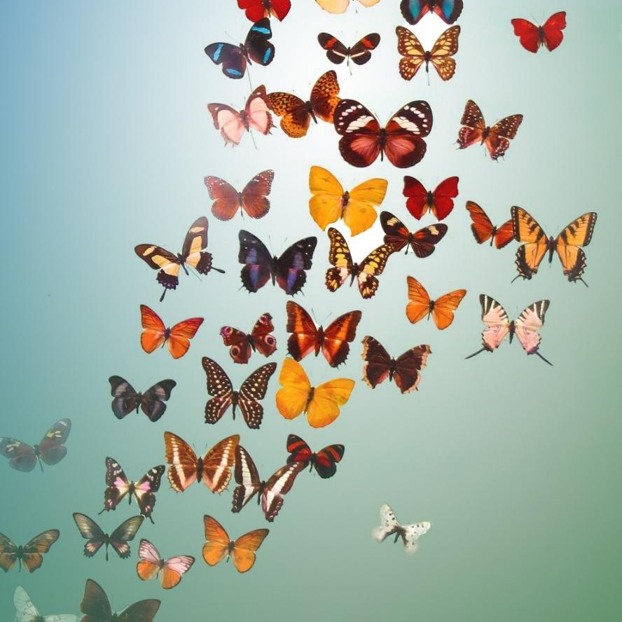Butterfly%2Binfo.jpg