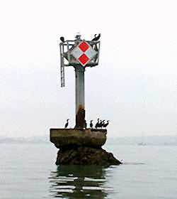 2. Cone Rock - This rock really is vaguely cone-shaped, about 500 meters off the shore of Belvedere. The rock is topped by a prominent marker and a perpetual crowd of cormorants. Cone Rock is easily visible and well-placed as a turning point for rowers.