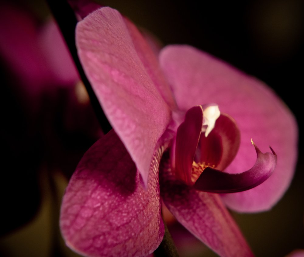 Orchid4xMacro