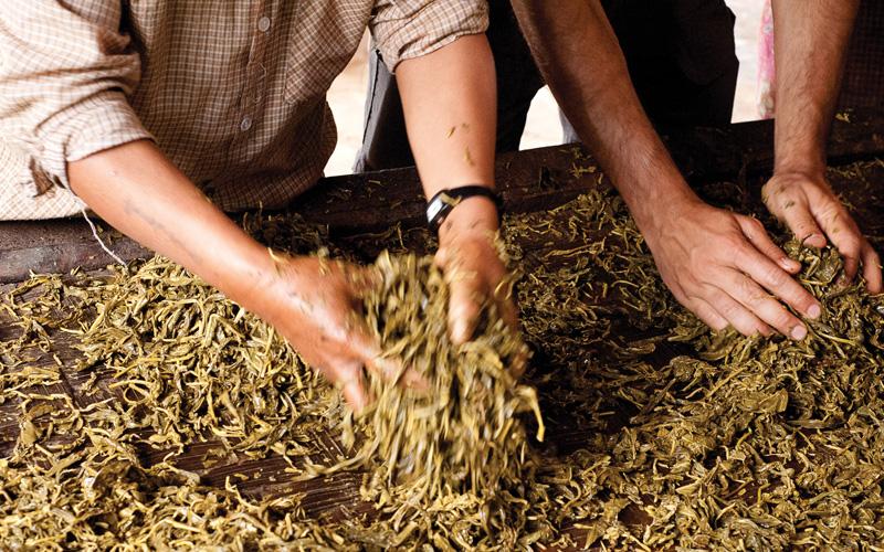 Fermented tea leaves blended by hand.