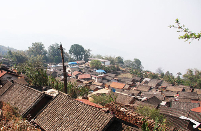 Ancient tea tree discovered in Bangwai village, Lancang County. (Image from  bensino.com)
