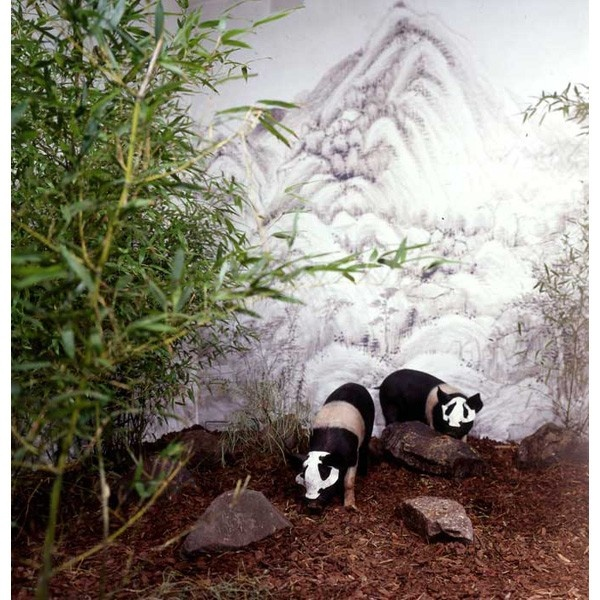 Panda Zoo (1998)  Mixed medIa installation Live pigs, bamboo, classical paintings