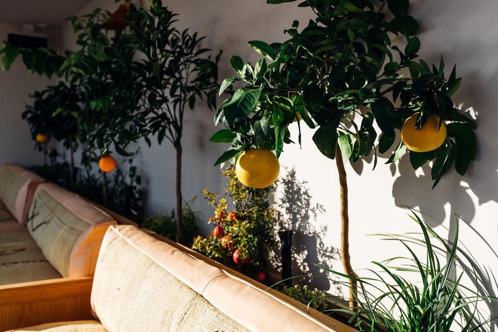 interior-citrus-close-up.jpg